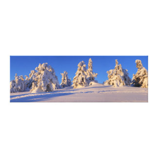 In the Harzer winter forest - a panorama Canvas Print