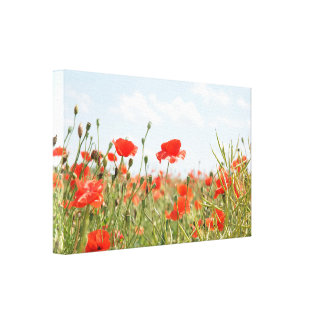 In the midst of a poppy field in Western Romania Canvas Print
