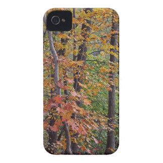 In the Midst of Nature Case-Mate iPhone 4 Case