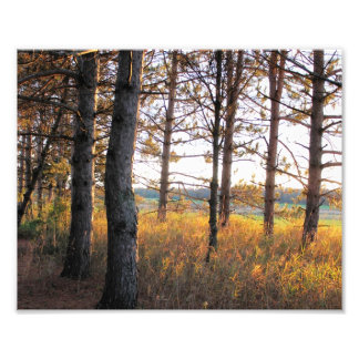 In The Pines - Fall in Door County  - Up to 16x20 Photo Print