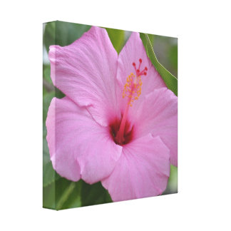 IN THE PINK 12x12 canvas Gallery Wrap Canvas