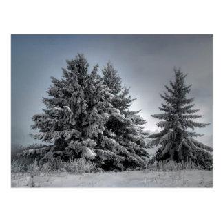 In The Spirit OF winter Postcard