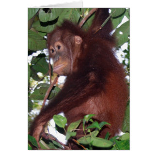 In the Wild: Orangutan Card
