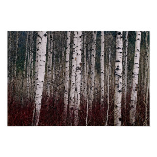 In The Woods. Print