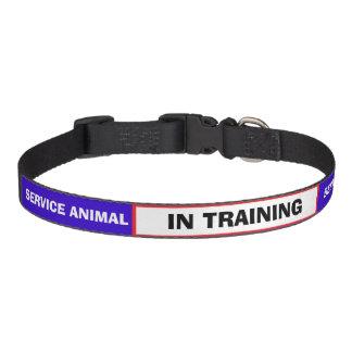 IN TRAINING Service Animal Dog Collar