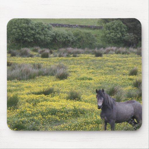 In Western Ireland,a horse stands in a bright Mousepad