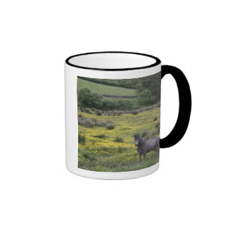 In Western Ireland,a horse stands in a bright Ringer Coffee Mug