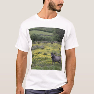 In Western Ireland,a horse stands in a bright T-Shirt
