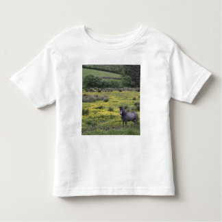 In Western Ireland,a horse stands in a bright Toddler T-shirt