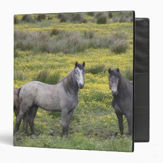 In Western Ireland, three horses with long Binders
