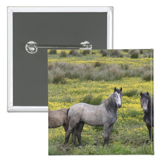 In Western Ireland, three horses with long Button