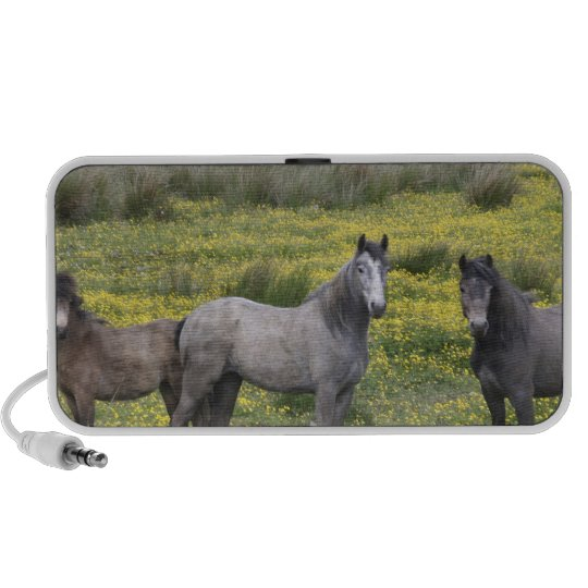 In Western Ireland, three horses with long Mini Speaker