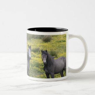In Western Ireland, three horses with long Two-Tone Coffee Mug