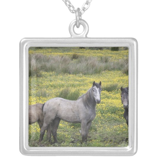 In Western Ireland, three horses with long Silver Plated Necklace