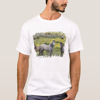In Western Ireland, three horses with long T-Shirt