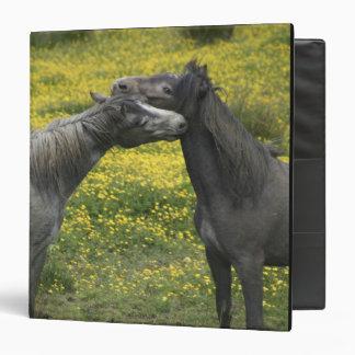 In Western Ireland,two horses nuzzle in a Vinyl Binder