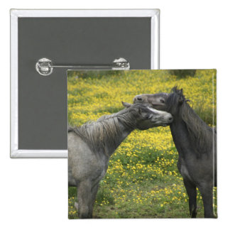 In Western Ireland,two horses nuzzle in a Pinback Button