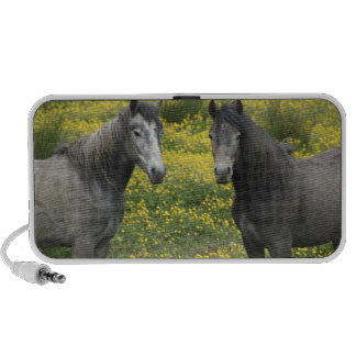 In Western Ireland, two horses with long PC Speakers
