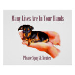 In Your Hands (Please Spay & Neuter) Print