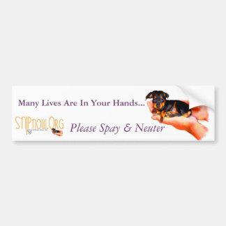 In Your Hands (Puppy) Bumper Sticker
