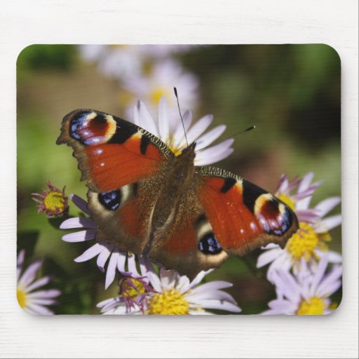 Inachis io mouse pad