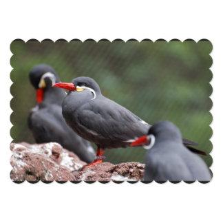Inca Terns 5x7 Paper Invitation Card