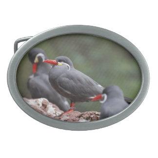 Inca Terns Belt Buckles
