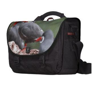 Inca Terns Commuter Bags