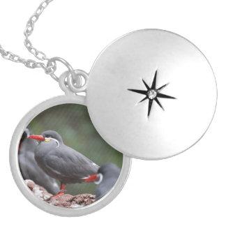 Inca Terns Round Locket Necklace