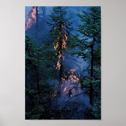 Incendio forestal póster