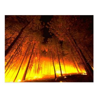 Incendio forestal tarjeta postal