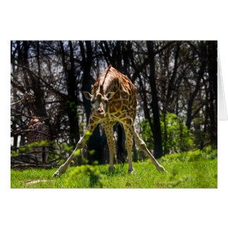 Inclinación de la jirafa tarjeta pequeña
