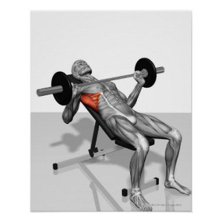 Incline Bench Press 2 Poster