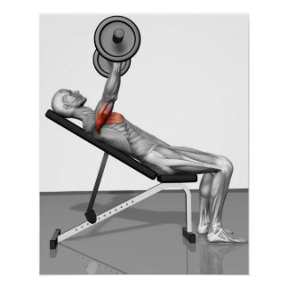 Incline Bench Press 3 Poster