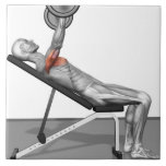 """Incline Bench Press 3 Tile<br><div class=""""desc"""">The muscles involved in the bench press incline exercise. The agonist (active) muscles of the body are highlighted. 
