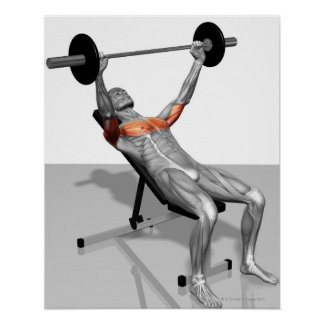 Incline Bench Press Poster