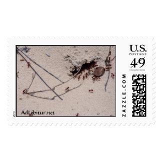 Incluso las hormigas tienen que ganar su guardan estampilla
