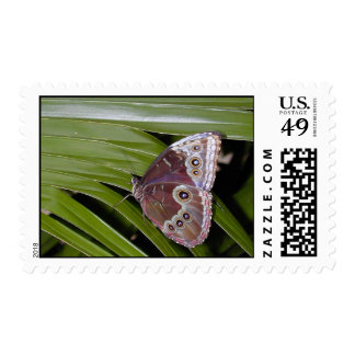 Incognito Butterfly Postage