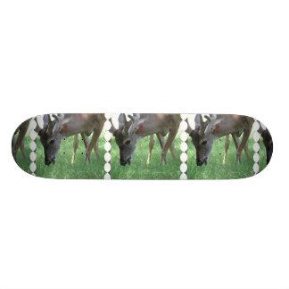 indefinido patines personalizados