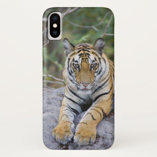 India, Bandhavgarh National Park, tiger cub Blackberry Bold Cover