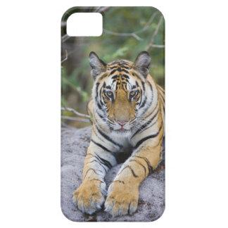 India, Bandhavgarh National Park, tiger cub iPhone SE/5/5s Case