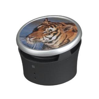 India, Bengal Tiger (Panthera Tigris) 2 Speaker
