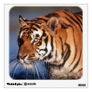 India, Bengal Tiger (Panthera Tigris) 2 Wall Decal