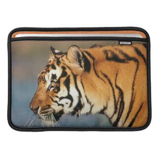 India, Bengal Tiger (Panthera Tigris) 4 MacBook Sleeve