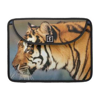 India, Bengal Tiger (Panthera Tigris) 4 Sleeve For MacBook Pro