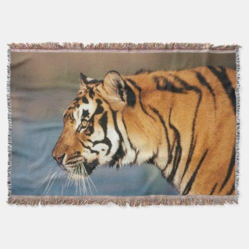 India, Bengal Tiger (Panthera Tigris) 4 Throw Blanket