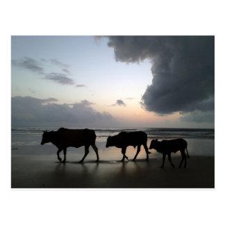 india cow family postales