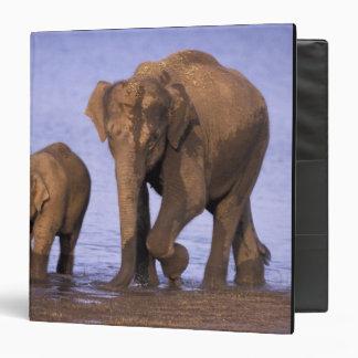 India, Nagarhole National Park. Asian elephant 3 Ring Binder