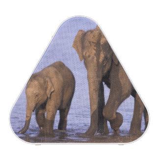 India, Nagarhole National Park. Asian elephant Bluetooth Speaker