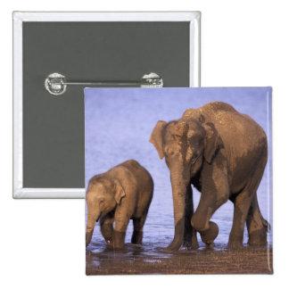 India, Nagarhole National Park. Asian elephant Pinback Buttons